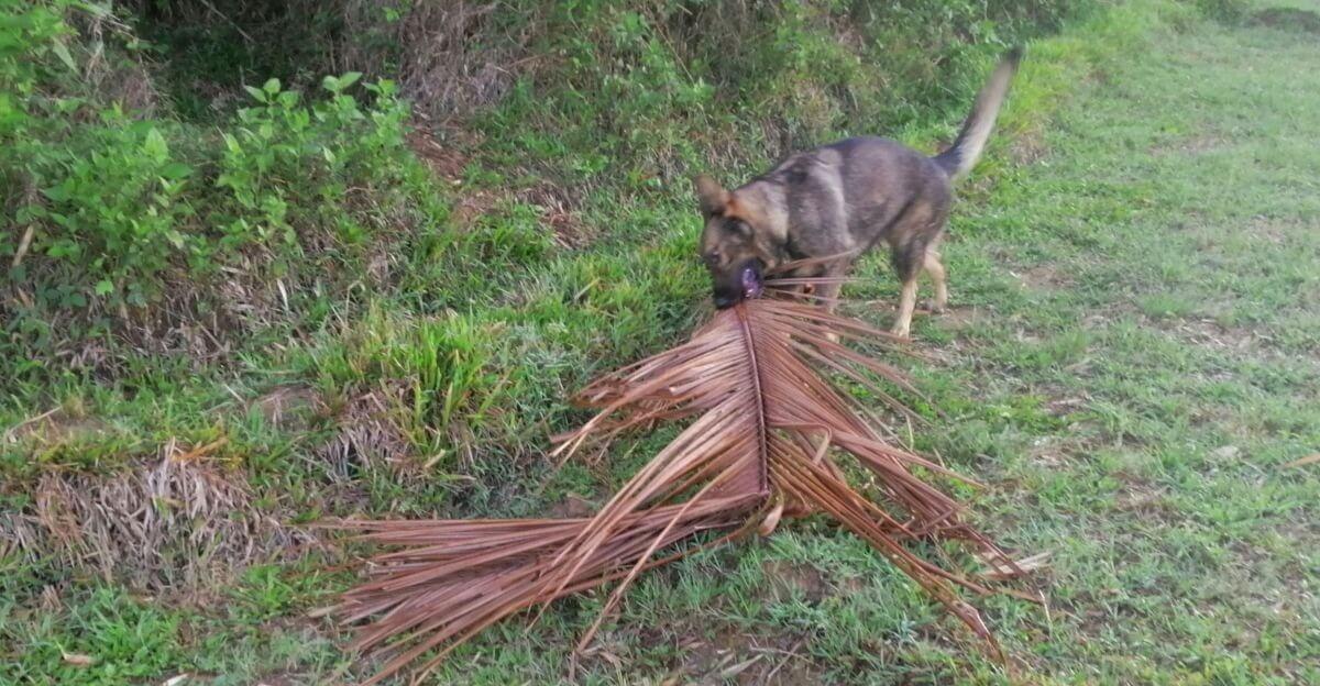 Blixten the lumberjack