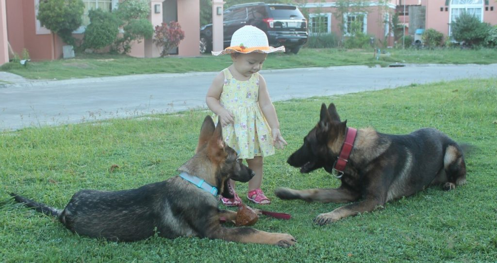 dogtraining protection