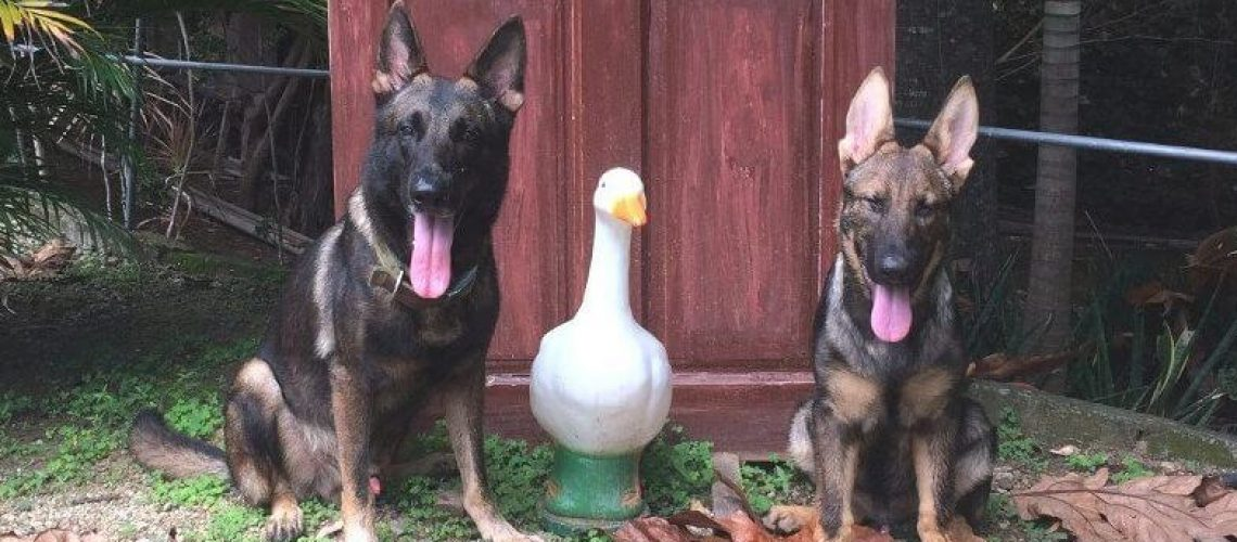 Valpis the Duck and Blixten