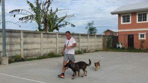 heel your dog off leash