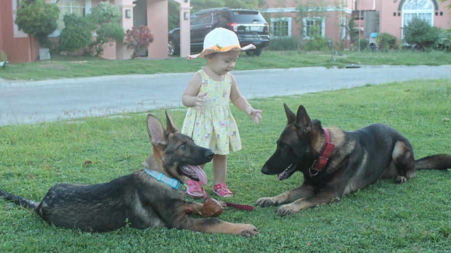 Michelle dogtrainer