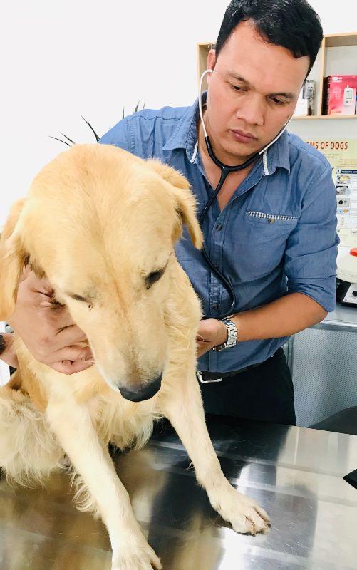 Val veterinarian
